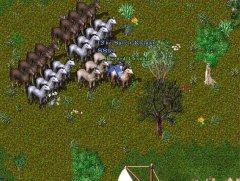 Une armée de chevaux !!!